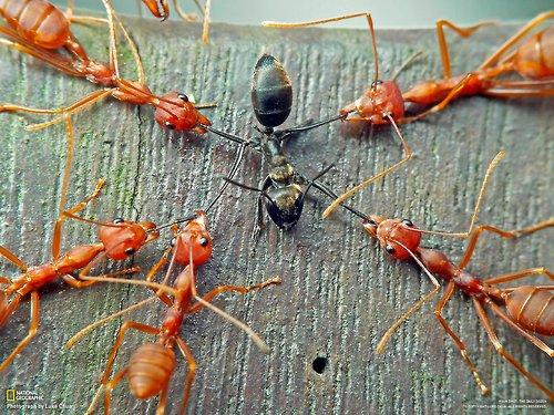 ant2slaveants
