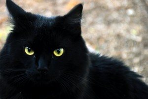 black-cat-10