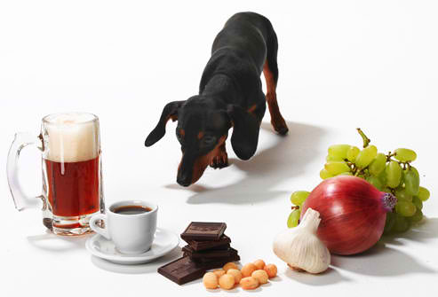 Top 10 Dangerous Foods for Dogs