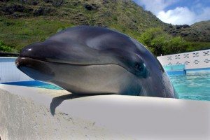 wholphin-0105