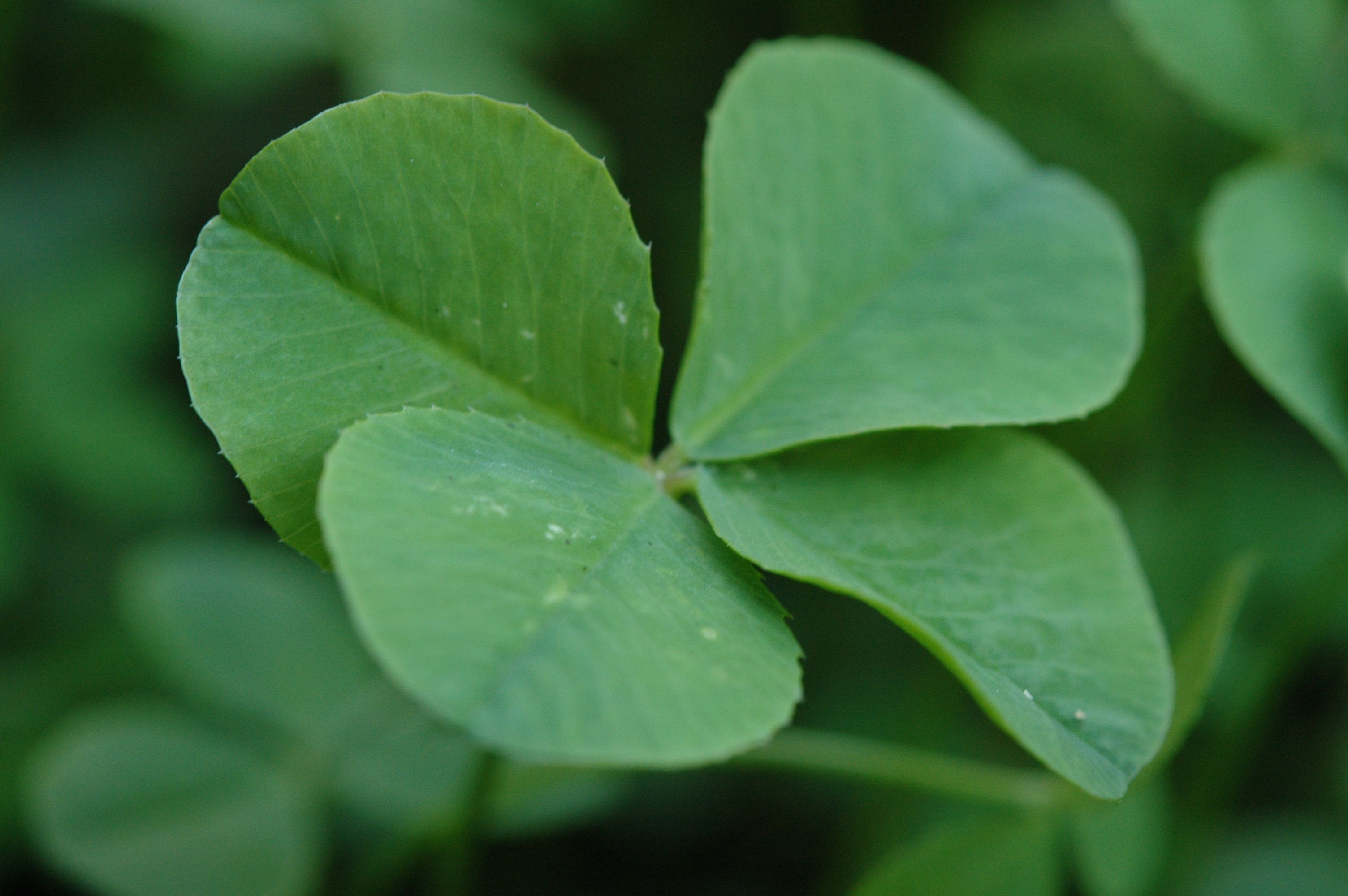10 St. Patrick's Day Superstitions