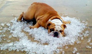 5-tips-on-how-to-keep-your-dog-cool-in-summer-cooling-equipment