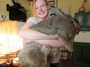 biggest-pets-in-the-world-1963292617-jul-1-2014-1-600x450