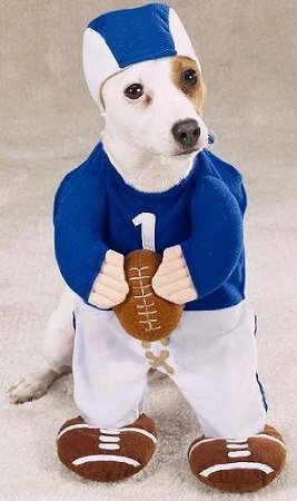 Halloween-Costume-Large-Dog-Football-Fever-Misc.-Misc.