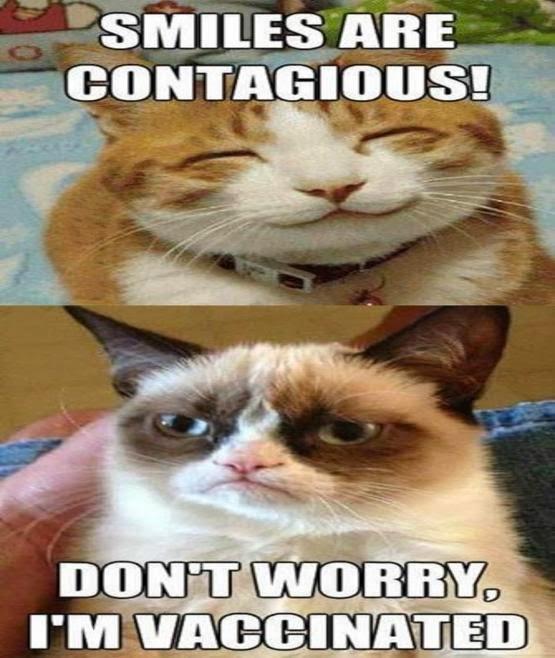10 Funny Grumpy Cat Memes
