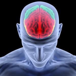 Focus-on-cognitive-benefits-builds