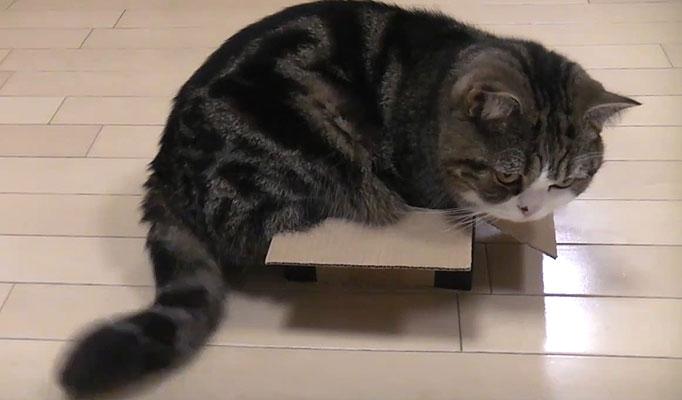 Cats_05_1254806a
