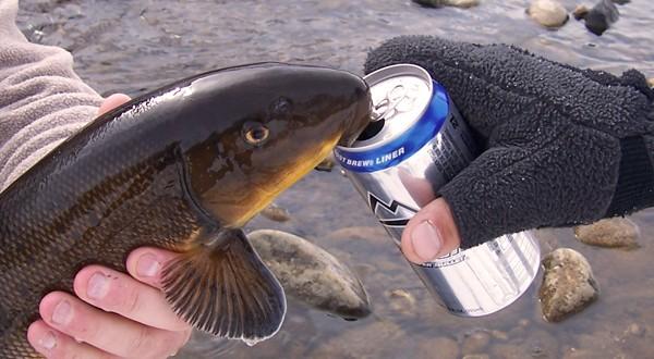 drunk-fish-600x330