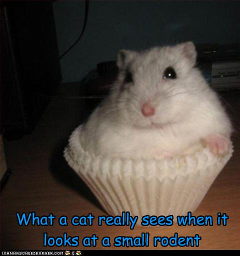 funny-hamsters-with-captions_394364